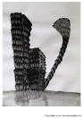 Michaela Maupicová, Z cyklu Oriment, 21×28 cm, tuš na papíře, 2010